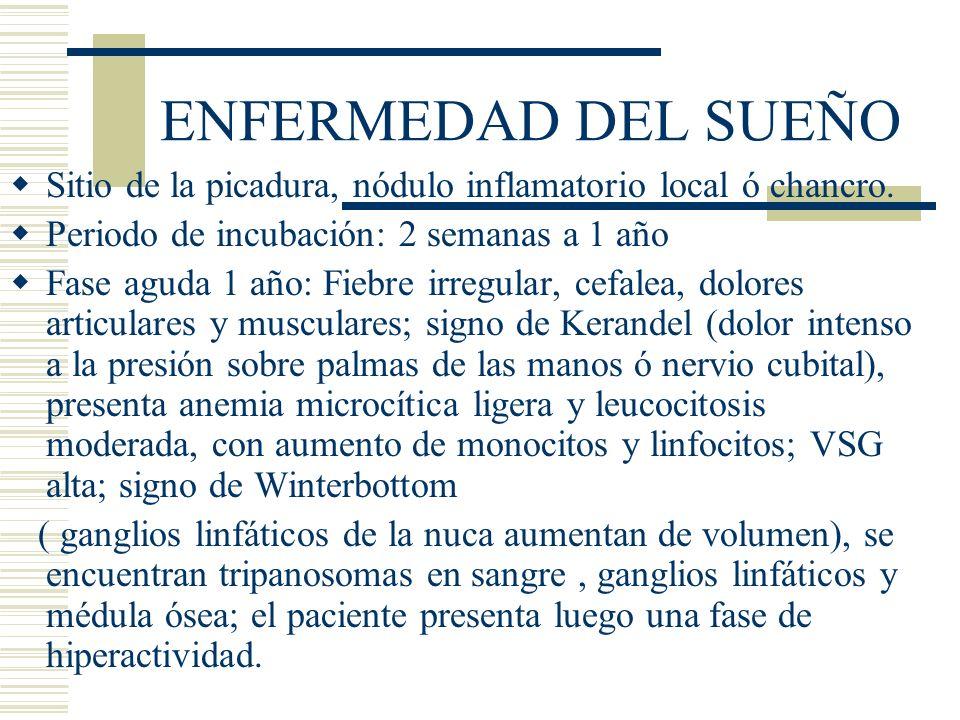 ENFERMEDAD DEL SUEÑO Sitio de la picadura, nódulo inflamatorio local ó chancro. Periodo de incubación: 2 semanas a 1 año.