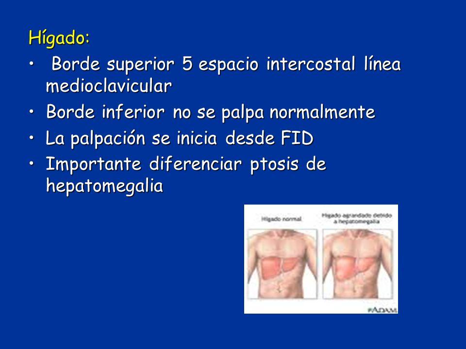 Hígado: Borde superior 5 espacio intercostal línea medioclavicular. Borde inferior no se palpa normalmente.