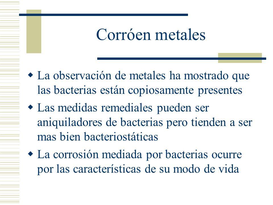 Corróen metales La observación de metales ha mostrado que las bacterias están copiosamente presentes.