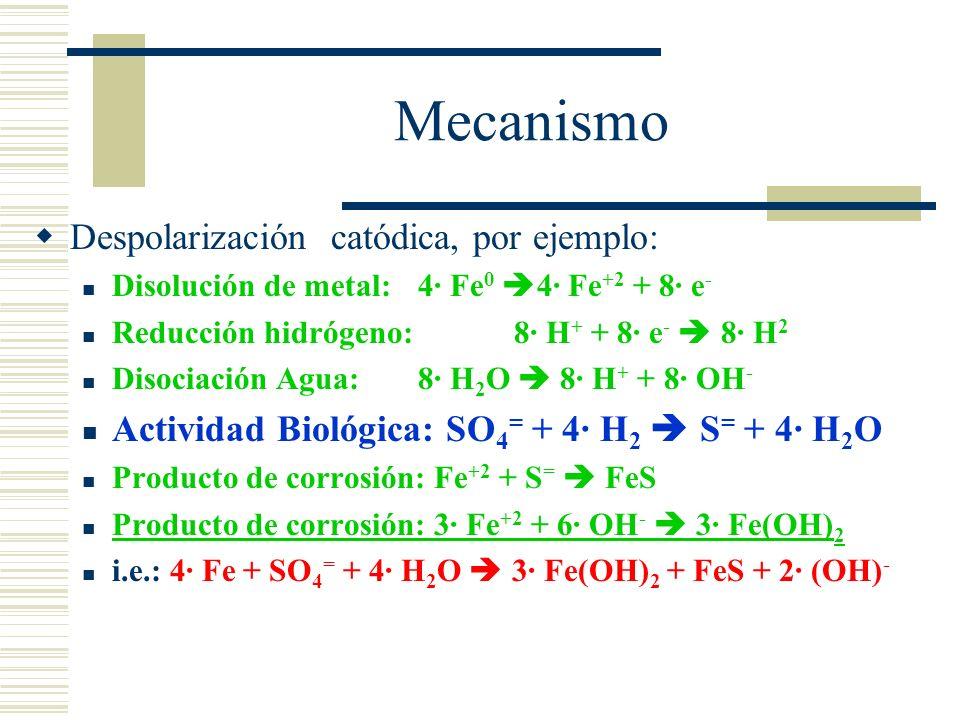 Mecanismo Despolarización catódica, por ejemplo: