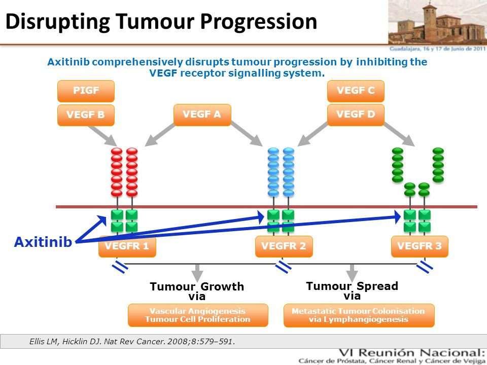 Disrupting Tumour Progression