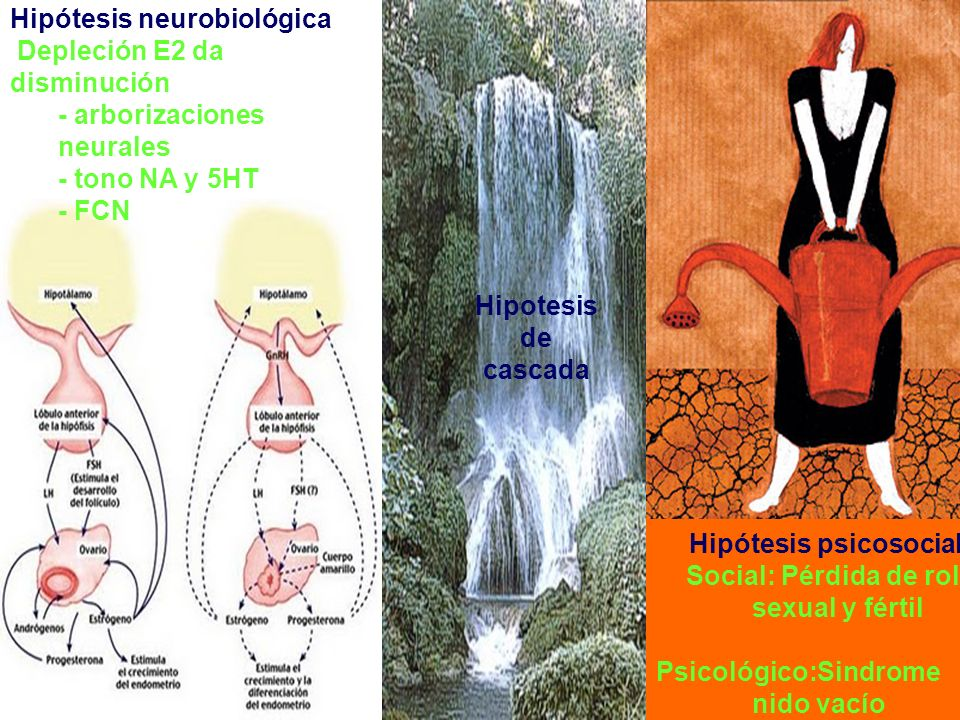 Hipótesis psicosocial