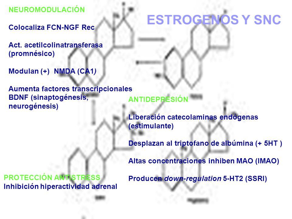 ESTROGENOS Y SNC NEUROMODULACIÓN Colocaliza FCN-NGF Rec