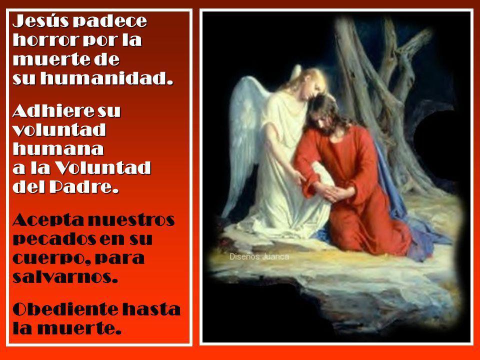 Jesús padece horror por la muerte de