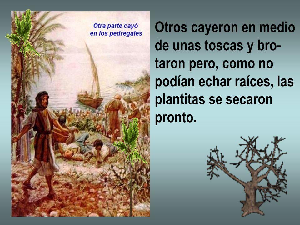 Otros cayeron en medio de unas toscas y bro- taron pero, como no. podían echar raíces, las. plantitas se secaron.