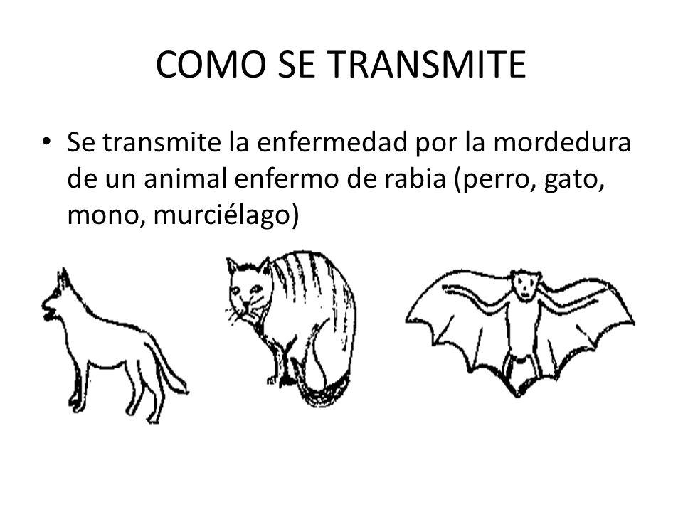 COMO SE TRANSMITESe transmite la enfermedad por la mordedura de un animal enfermo de rabia (perro, gato, mono, murciélago)