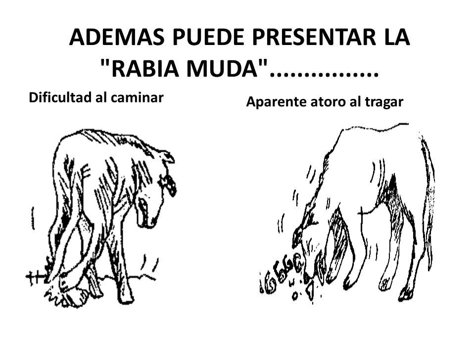ADEMAS PUEDE PRESENTAR LA RABIA MUDA ................
