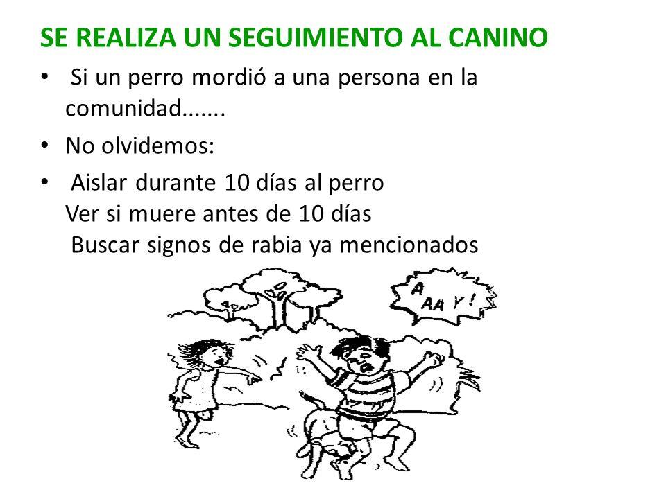 SE REALIZA UN SEGUIMIENTO AL CANINO