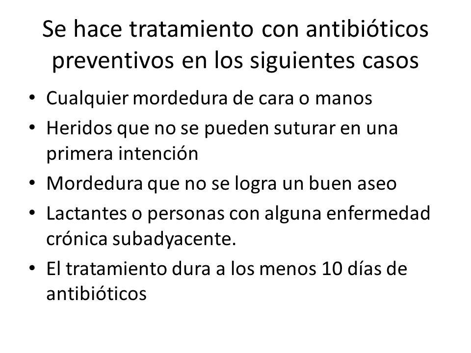 Se hace tratamiento con antibióticos preventivos en los siguientes casos