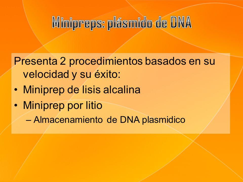 Minipreps: plásmido de DNA