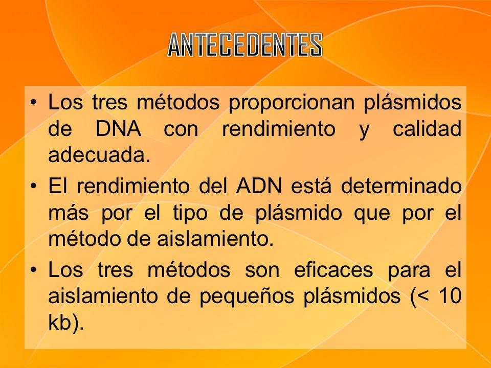 ANTECEDENTES Los tres métodos proporcionan plásmidos de DNA con rendimiento y calidad adecuada.
