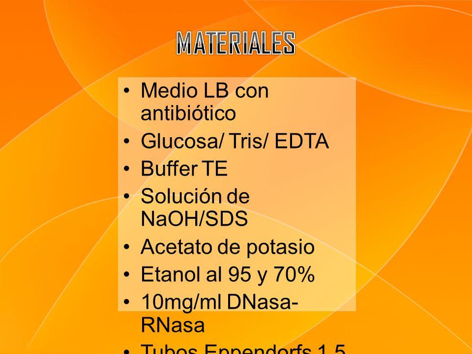 MATERIALES Medio LB con antibiótico Glucosa/ Tris/ EDTA Buffer TE