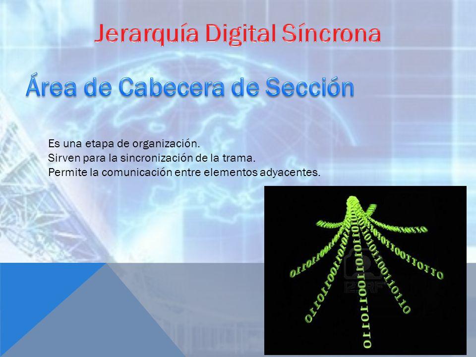 Jerarquía Digital Síncrona Área de Cabecera de Sección