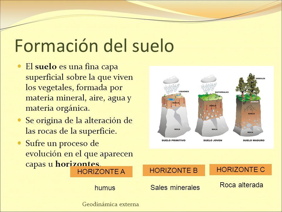 Tema 3 el suelo y su importancia ppt descargar for Proceso de formacion del suelo