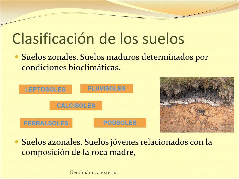 Tema 3 el suelo y su importancia ppt descargar for Importancia de los suelos