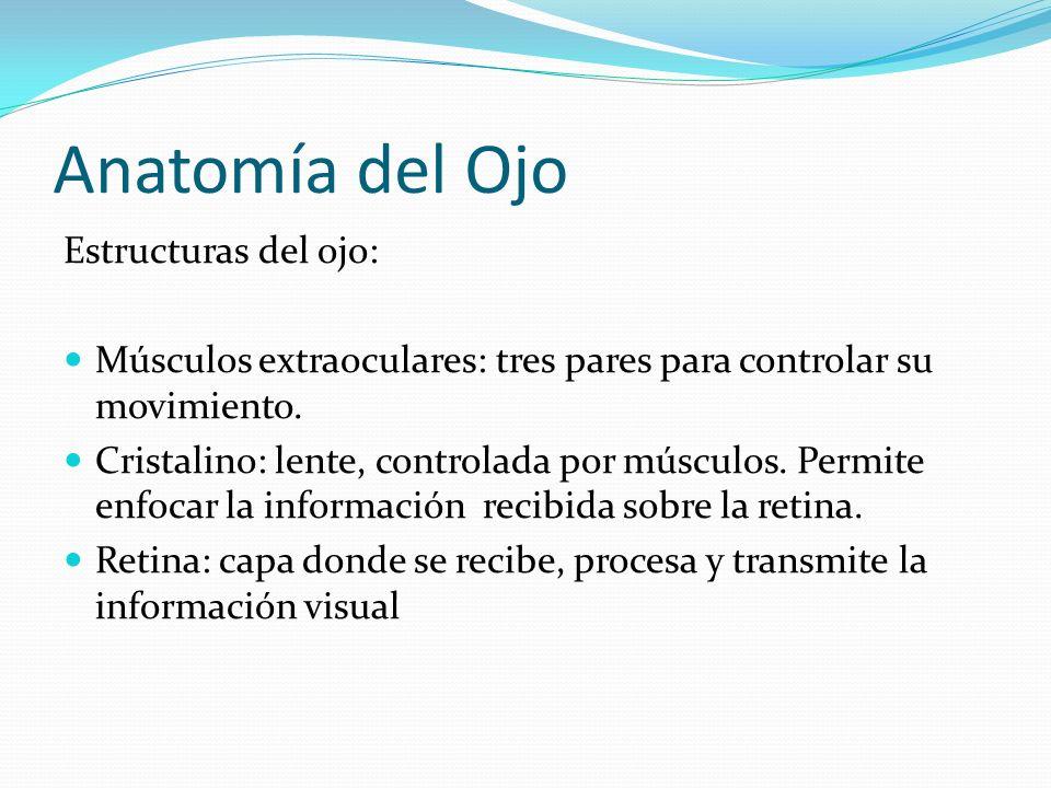 Anatomía del Ojo Estructuras del ojo: