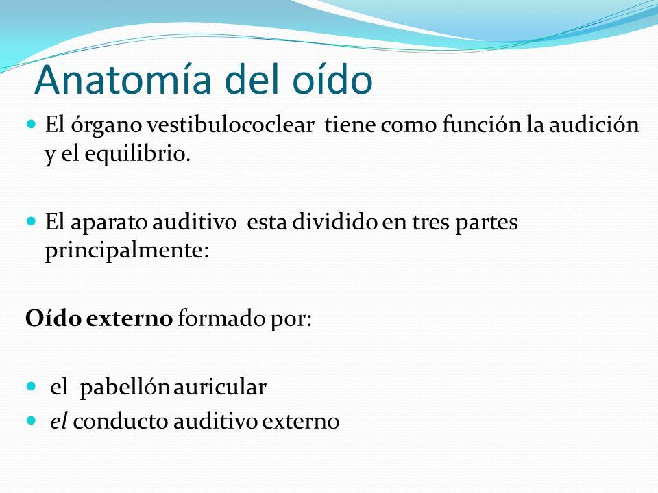 Anatomía del oído El órgano vestibulococlear tiene como función la audición y el equilibrio.