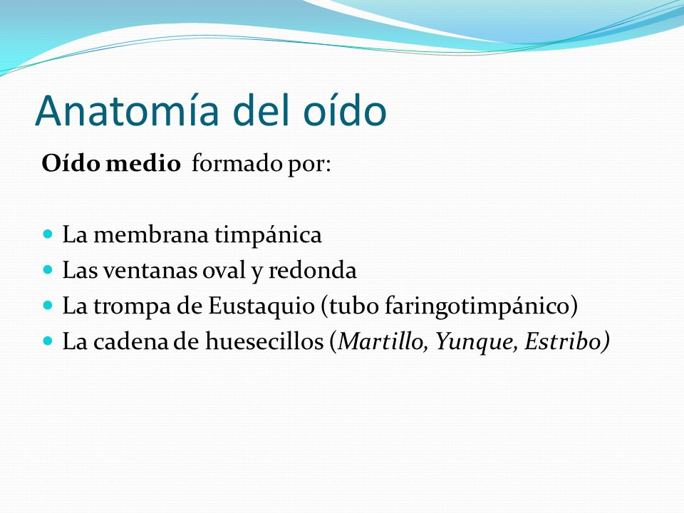 Anatomía del oído Oído medio formado por: La membrana timpánica
