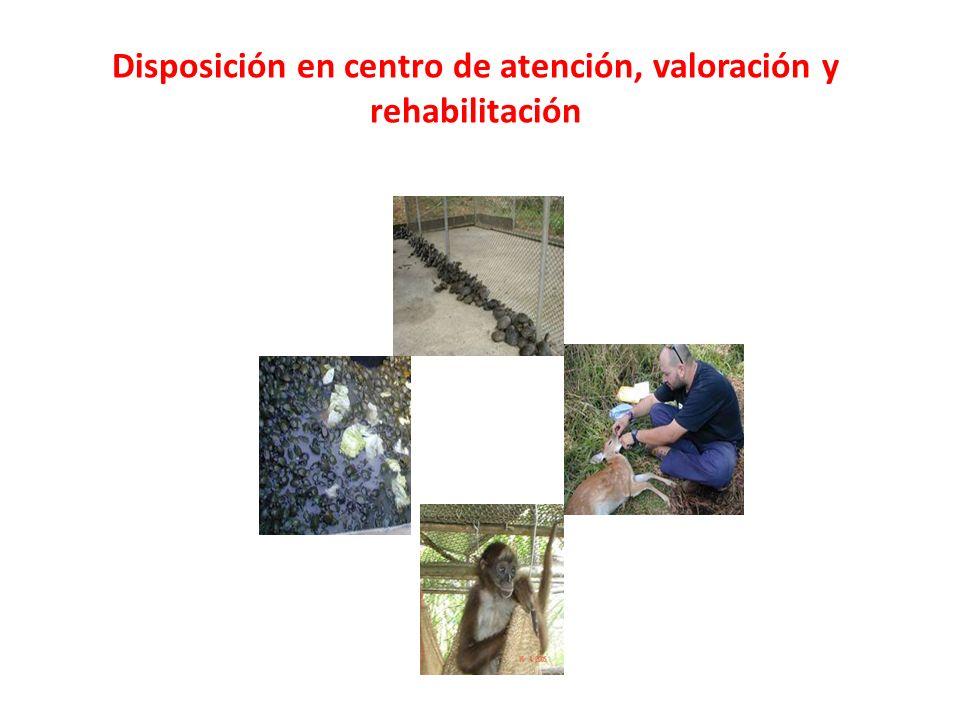 Disposición en centro de atención, valoración y rehabilitación