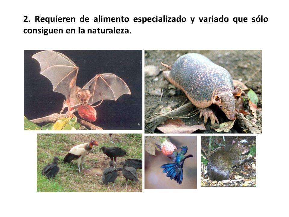 2. Requieren de alimento especializado y variado que sólo consiguen en la naturaleza.