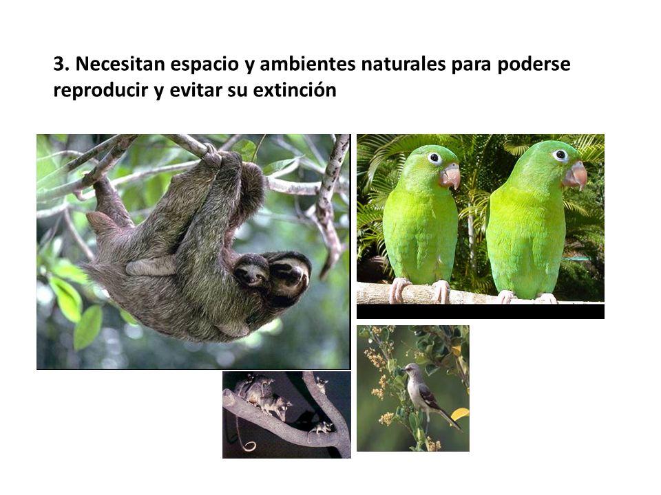 3. Necesitan espacio y ambientes naturales para poderse reproducir y evitar su extinción