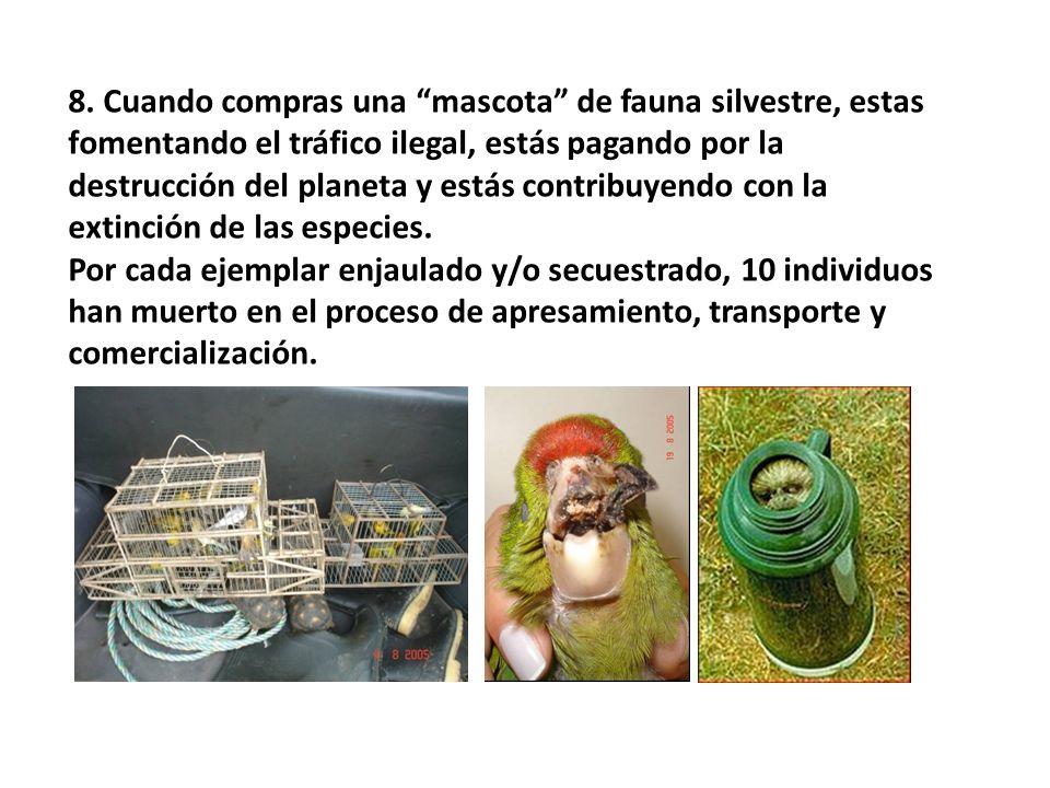 8. Cuando compras una mascota de fauna silvestre, estas fomentando el tráfico ilegal, estás pagando por la destrucción del planeta y estás contribuyendo con la extinción de las especies.