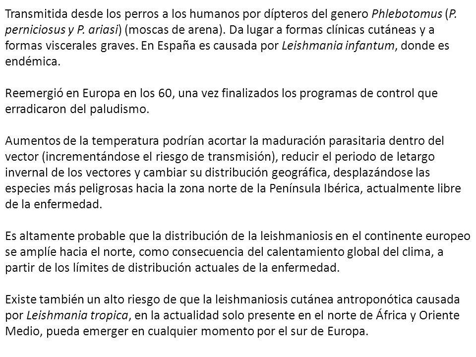 Transmitida desde los perros a los humanos por dípteros del genero Phlebotomus (P. perniciosus y P. ariasi) (moscas de arena). Da lugar a formas clínicas cutáneas y a formas viscerales graves. En España es causada por Leishmania infantum, donde es endémica.