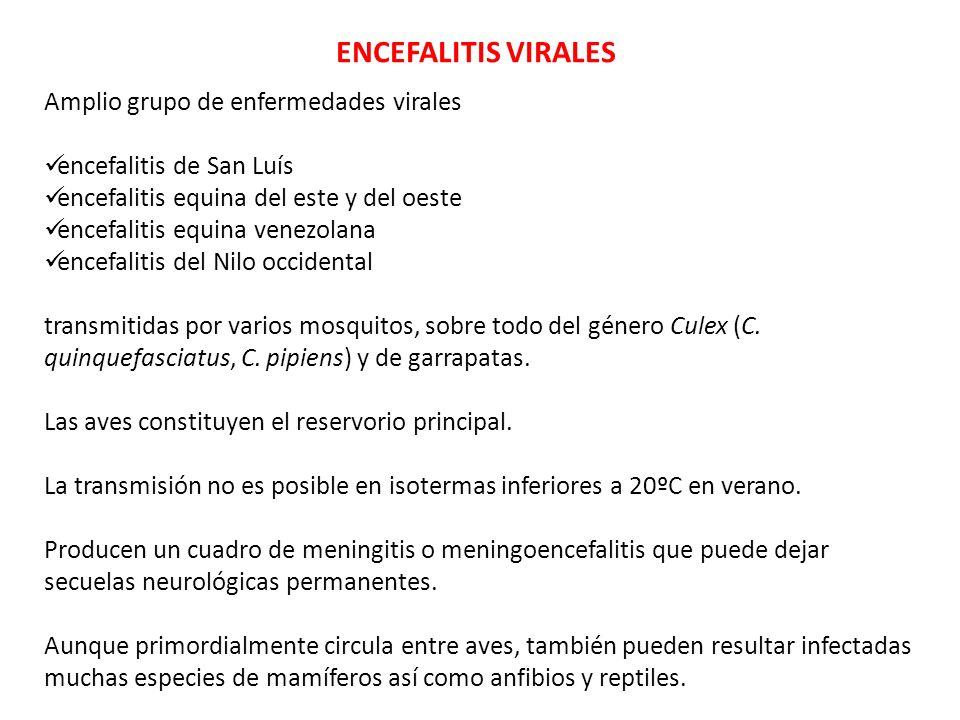 ENCEFALITIS VIRALES Amplio grupo de enfermedades virales