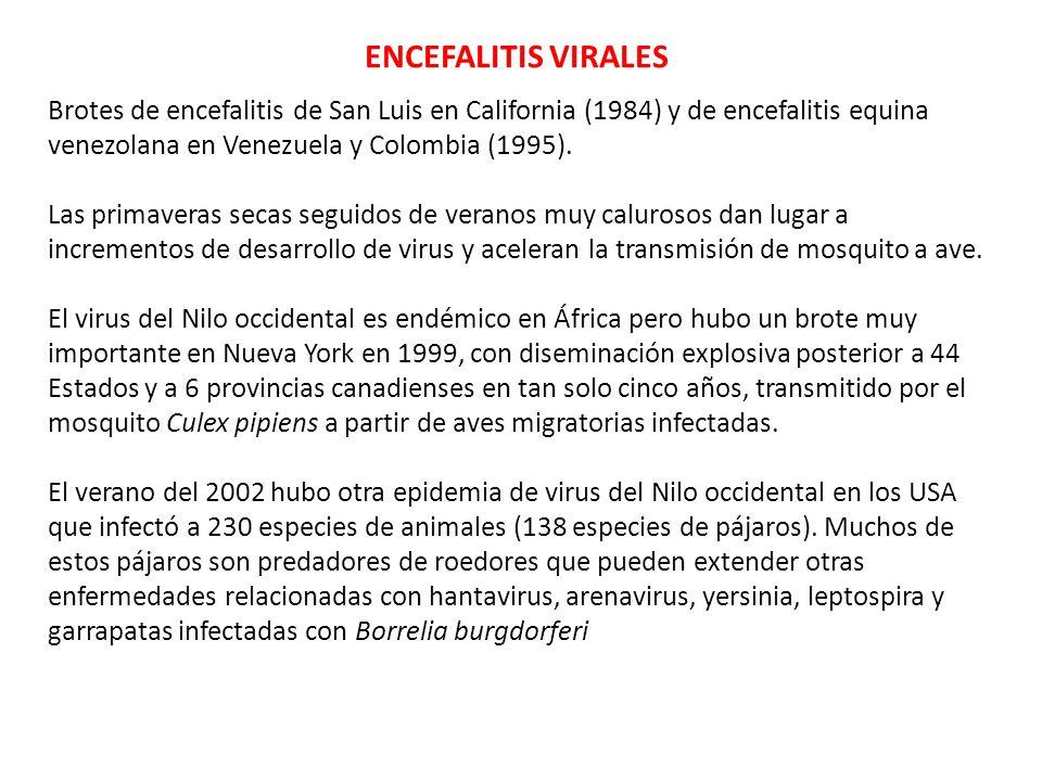ENCEFALITIS VIRALESBrotes de encefalitis de San Luis en California (1984) y de encefalitis equina venezolana en Venezuela y Colombia (1995).