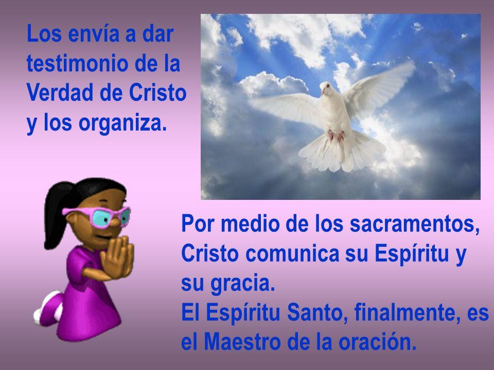 Los envía a dar testimonio de la. Verdad de Cristo. y los organiza. Por medio de los sacramentos,