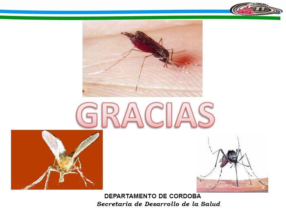 GRACIAS DEPARTAMENTO DE CORDOBA Secretaria de Desarrollo de la Salud