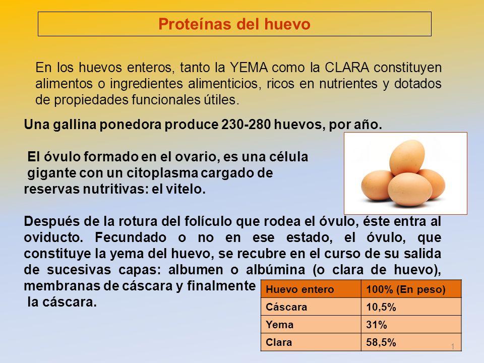 Prote nas del huevo en los huevos enteros tanto la yema for Huevo en el ano