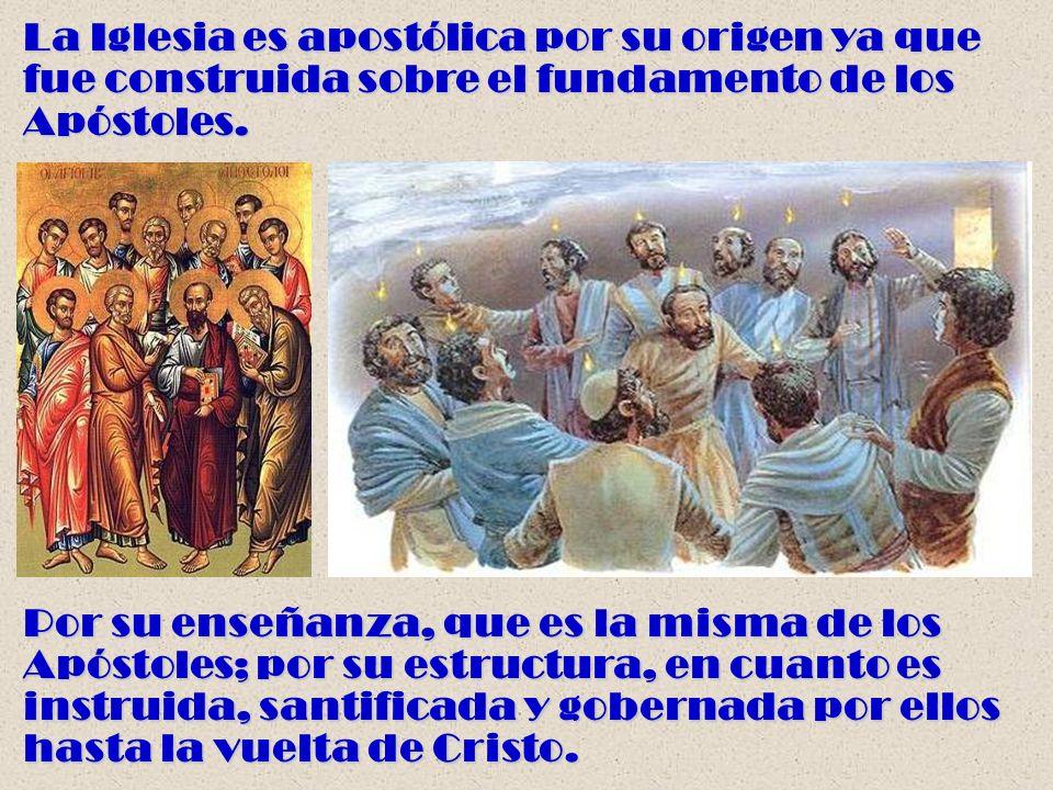 La Iglesia es apostólica por su origen ya que