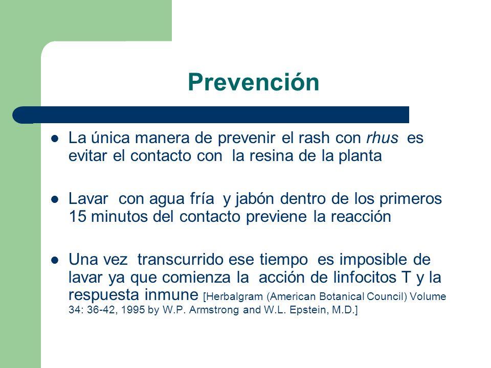 Prevención La única manera de prevenir el rash con rhus es evitar el contacto con la resina de la planta.