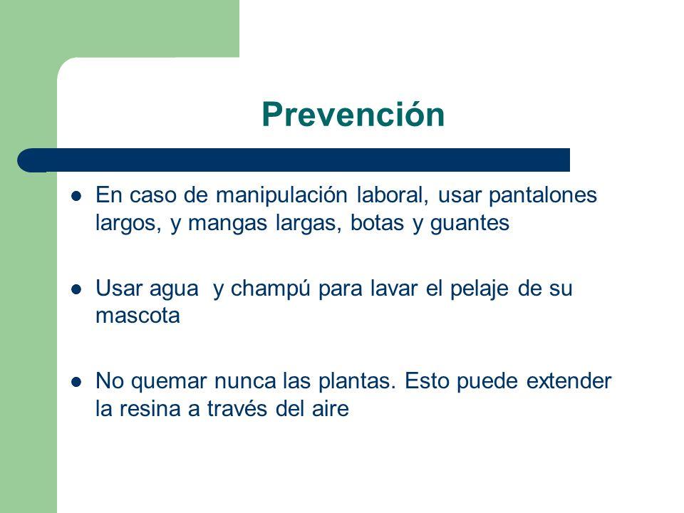 Prevención En caso de manipulación laboral, usar pantalones largos, y mangas largas, botas y guantes.