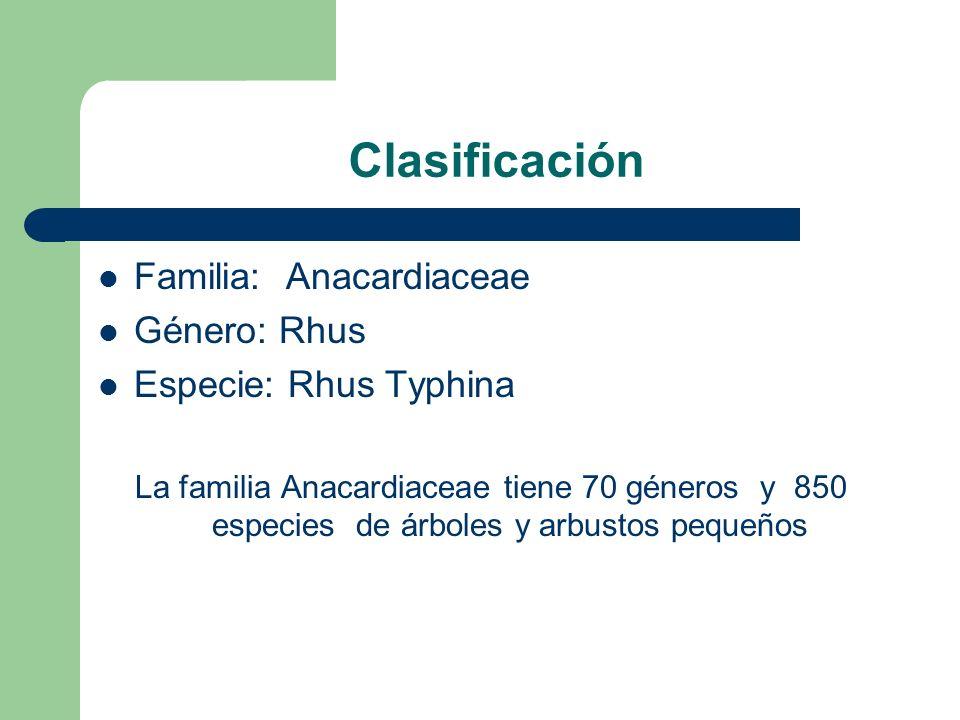 Clasificación Familia: Anacardiaceae Género: Rhus