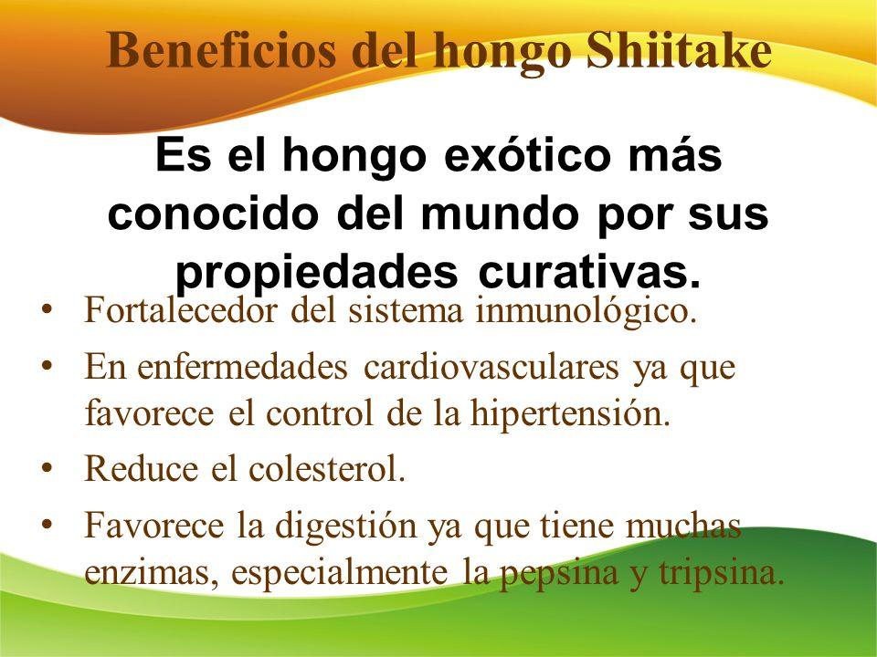 Beneficios del hongo Shiitake