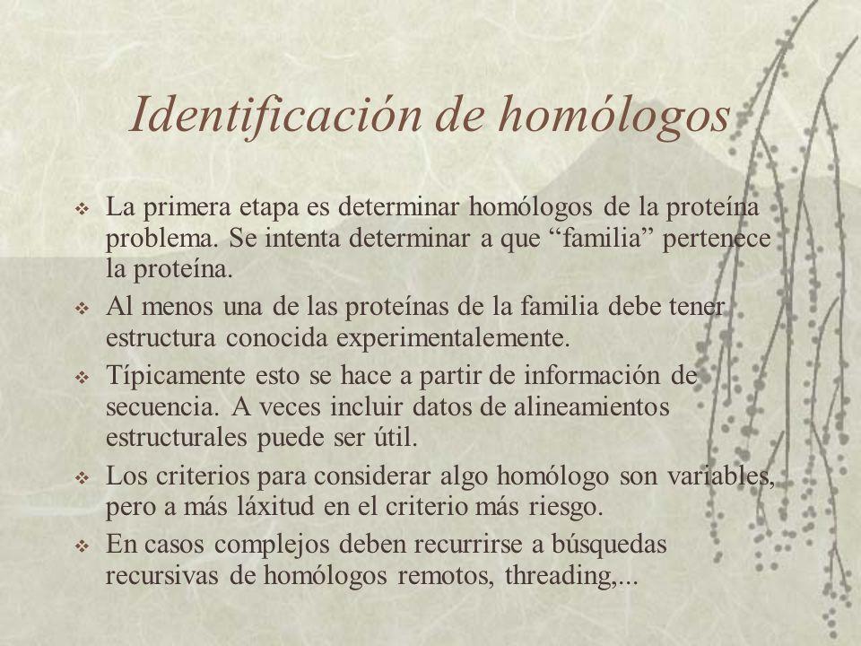 Identificación de homólogos