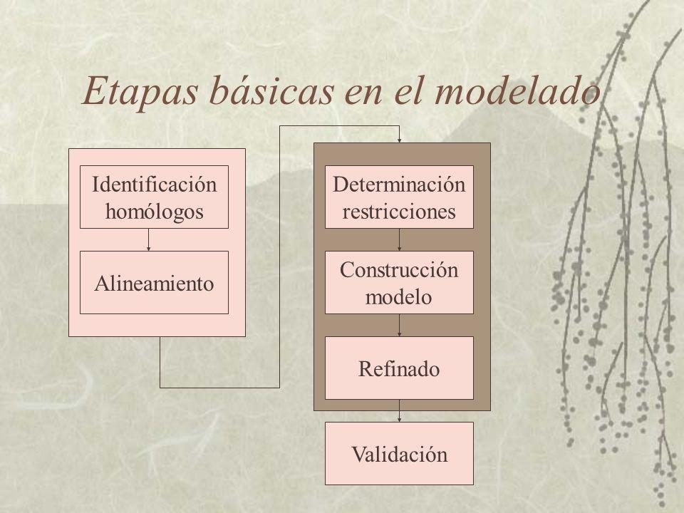 Etapas básicas en el modelado