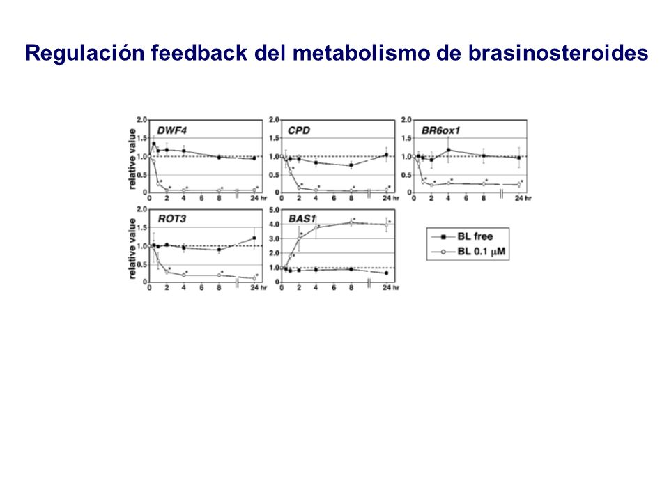 Regulación feedback del metabolismo de brasinosteroides