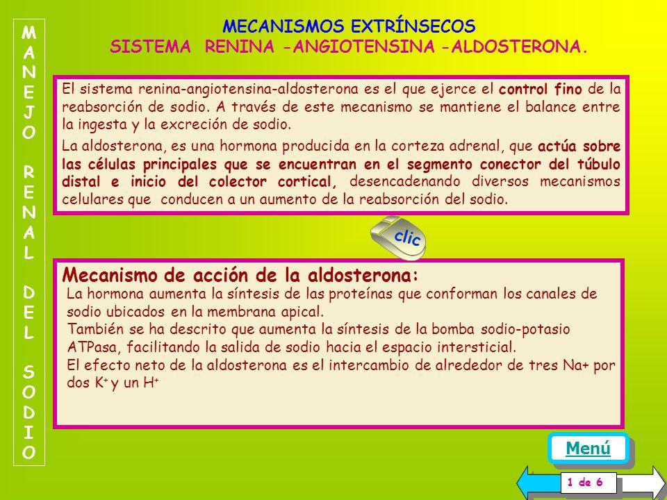 MECANISMOS EXTRÍNSECOS SISTEMA RENINA -ANGIOTENSINA -ALDOSTERONA.