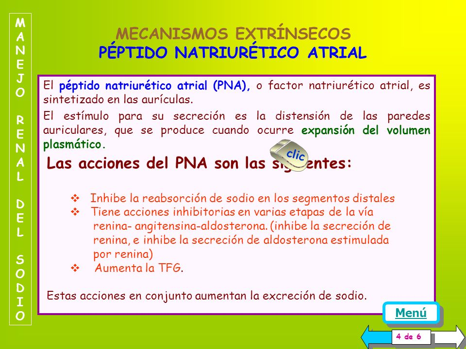 MECANISMOS EXTRÍNSECOS PÉPTIDO NATRIURÉTICO ATRIAL