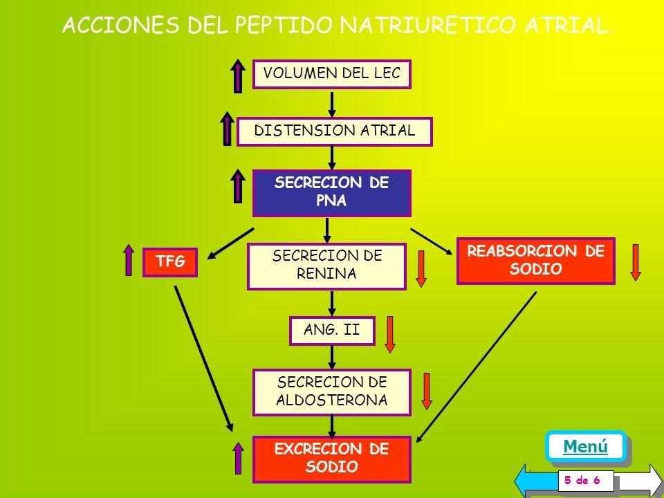 ACCIONES DEL PEPTIDO NATRIURETICO ATRIAL.