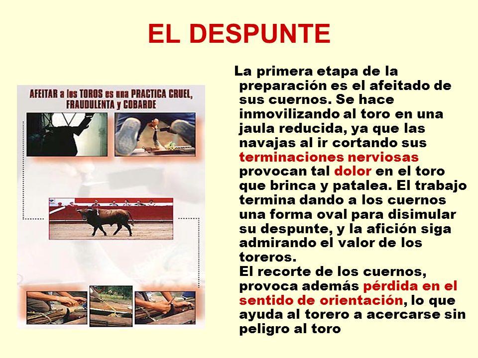 EL DESPUNTE