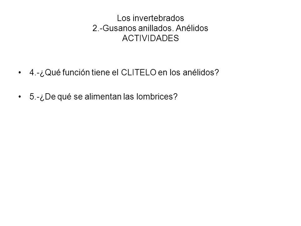 Los invertebrados 2.-Gusanos anillados. Anélidos ACTIVIDADES