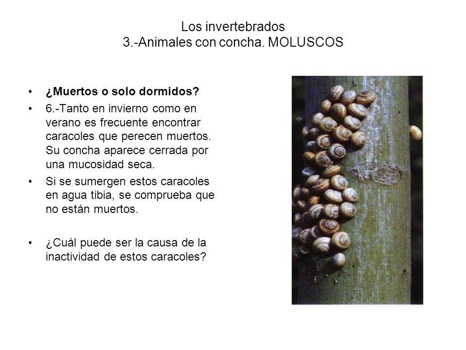 Los invertebrados 3.-Animales con concha. MOLUSCOS