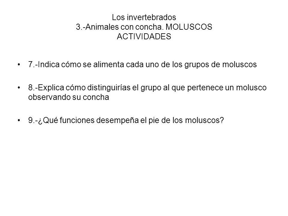 Los invertebrados 3.-Animales con concha. MOLUSCOS ACTIVIDADES