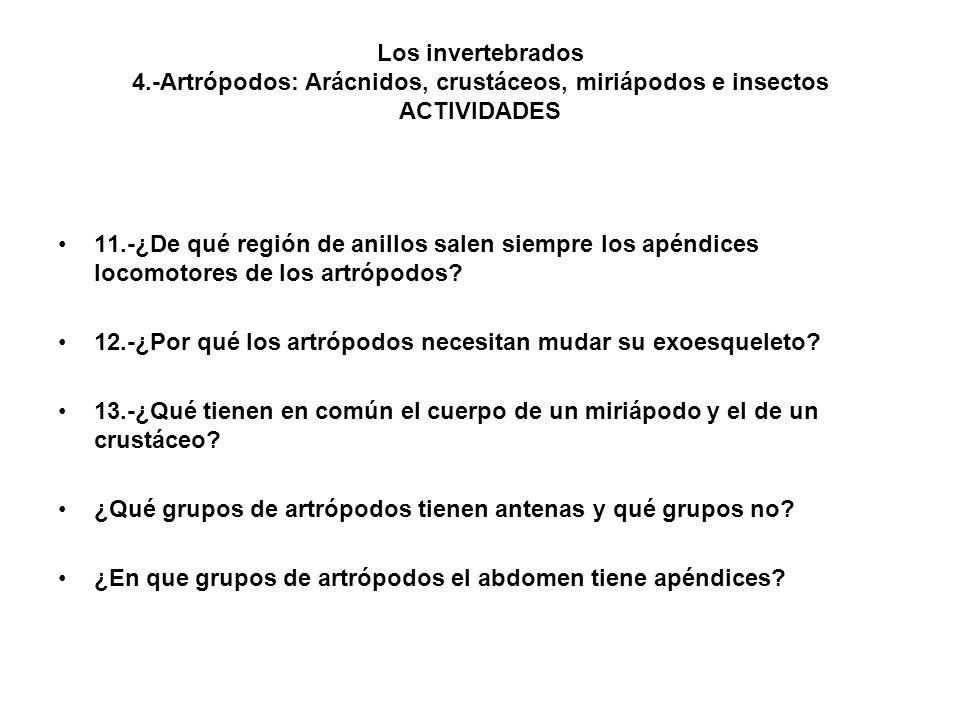 Los invertebrados 4.-Artrópodos: Arácnidos, crustáceos, miriápodos e insectos ACTIVIDADES