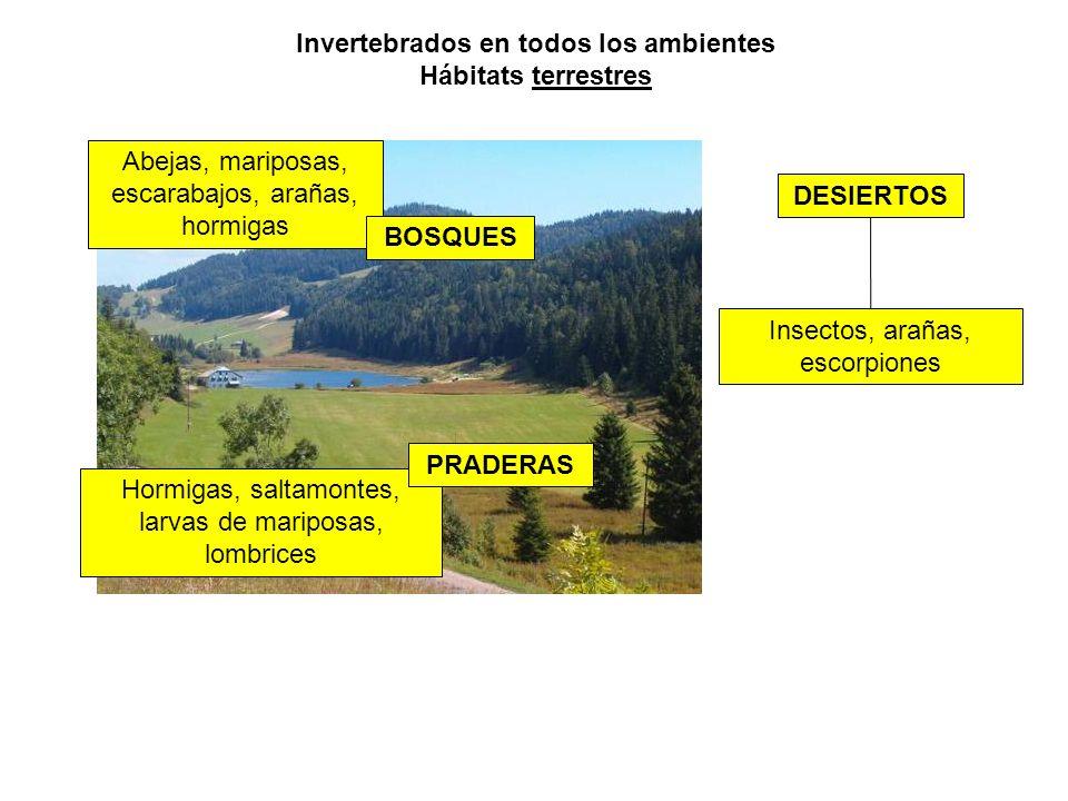 Invertebrados en todos los ambientes Hábitats terrestres