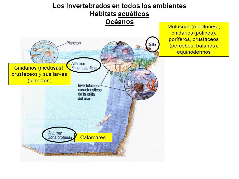 Los Invertebrados en todos los ambientes Hábitats acuáticos Océanos